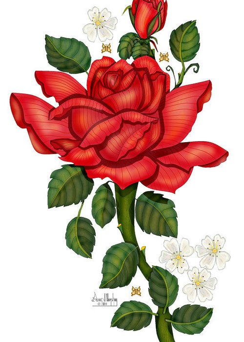 Hand-drawn Digital Art; Hand-drawn Digital Rose; Digital Rose; Anne Norskog Rose; Red Rose; Red Rose On White Background Greeting Card featuring the painting Christmas Rose 2011 by Anne Norskog