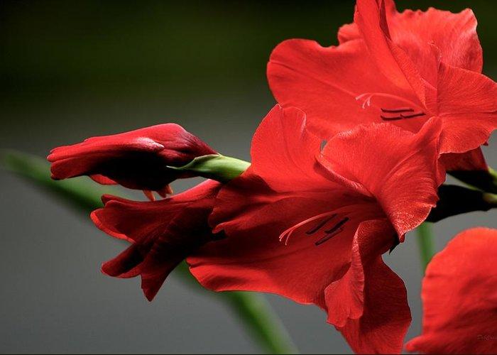 Flower Greeting Card featuring the photograph Chromatic Gladiola by Deborah Crew-Johnson