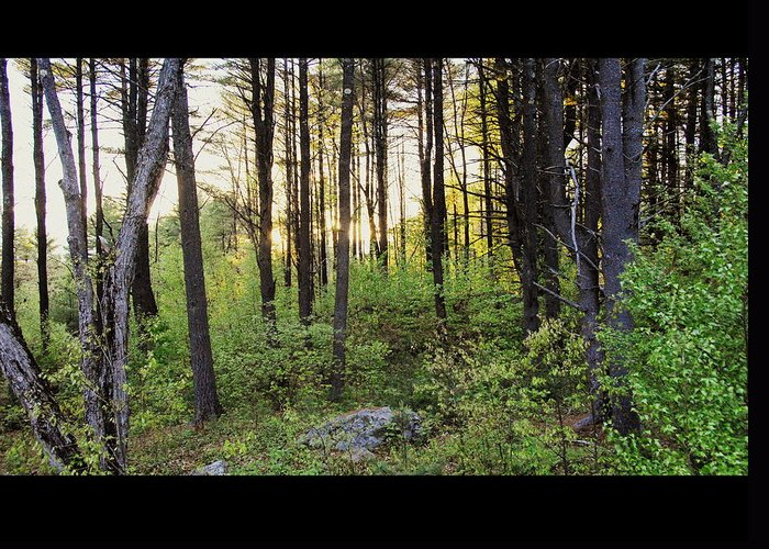 Woods Greeting Card featuring the photograph Cinematic Style Back Woods At Sunset by Christine Tuck