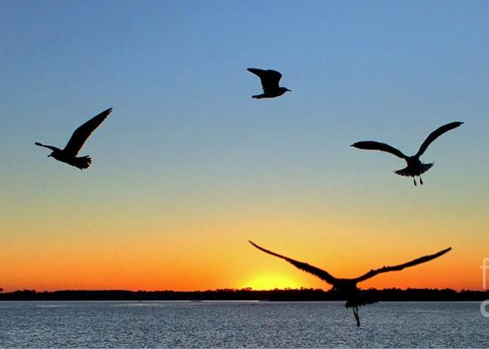 Sunrise Greeting Card featuring the photograph Circle Meeting At Sunrise by Benanne Stiens