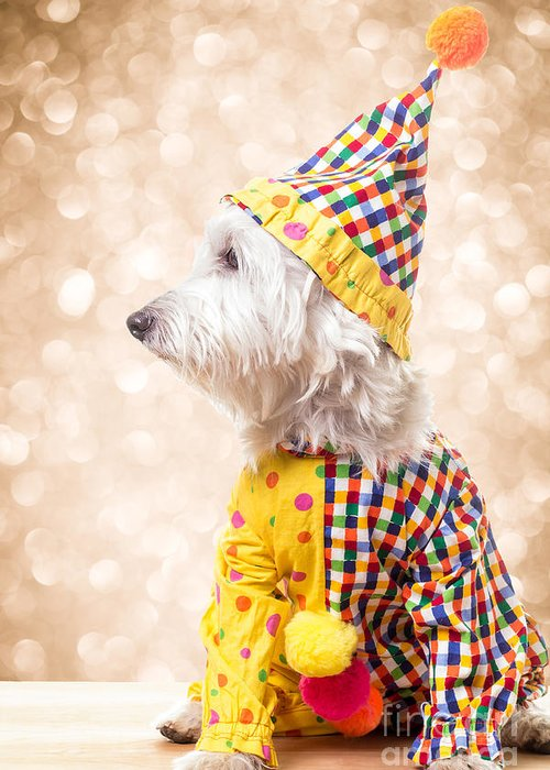 Circus Greeting Card featuring the photograph Circus Clown Dog by Edward Fielding
