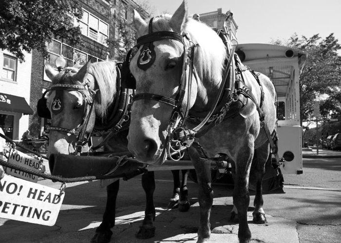 Horses Greeting Card featuring the photograph City Life by Betsy Knapp