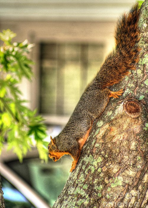 Fox Squirrel Photograph Greeting Card featuring the photograph Climbing Down by Ester Rogers