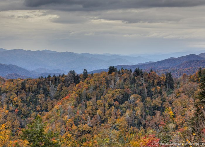 Clingmans Dome Greeting Card featuring the photograph Clingman's Dome IIi by Charles Warren