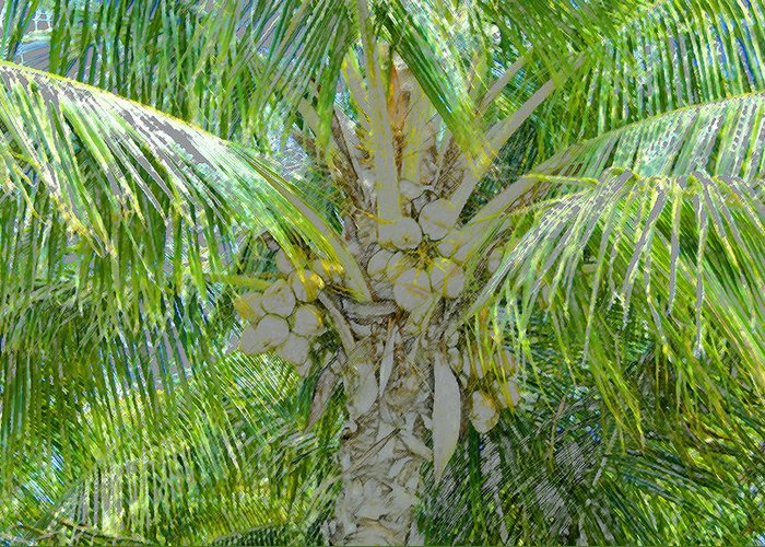 Coconut Palm Greeting Card featuring the painting Coconut Palm by David Lee Thompson