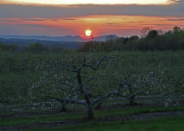 Orchard Greeting Card featuring the photograph Cold Spring Orchard by Mike Martin