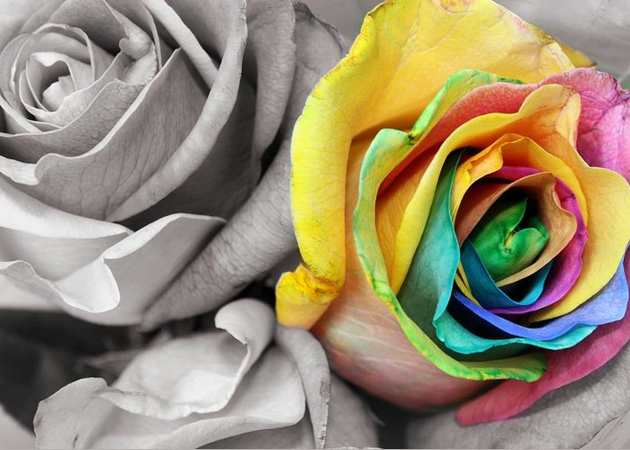 Rose Greeting Card featuring the photograph Color My World by Megan Zidek