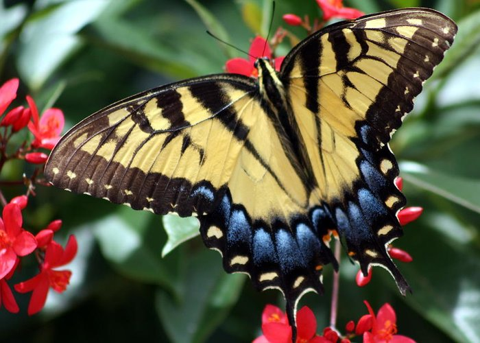 Swallowtail Butterfly Greeting Card featuring the photograph Color Wheel by LC Linda Scott