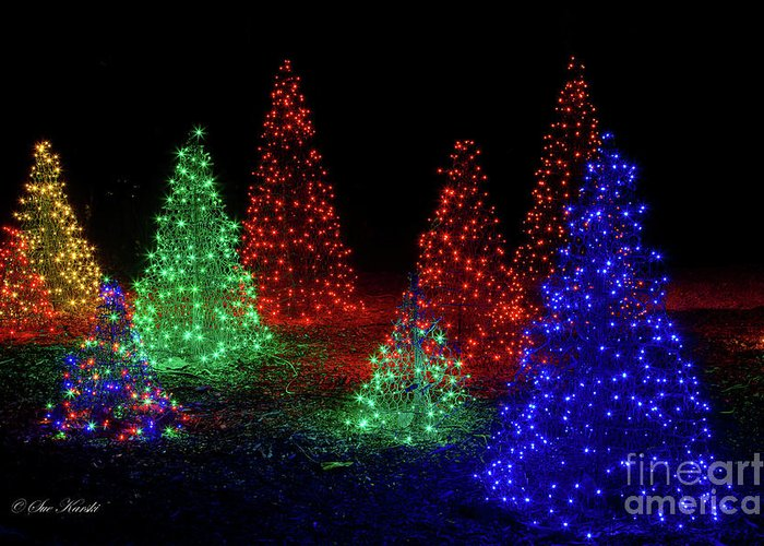 botanical garden greeting card featuring the photograph colorful christmas trees by sue karski - American Sales Christmas Trees