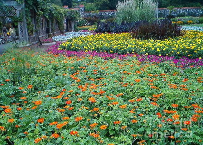 Flowers Greeting Card featuring the photograph Colorful Garden by Terry Hunt