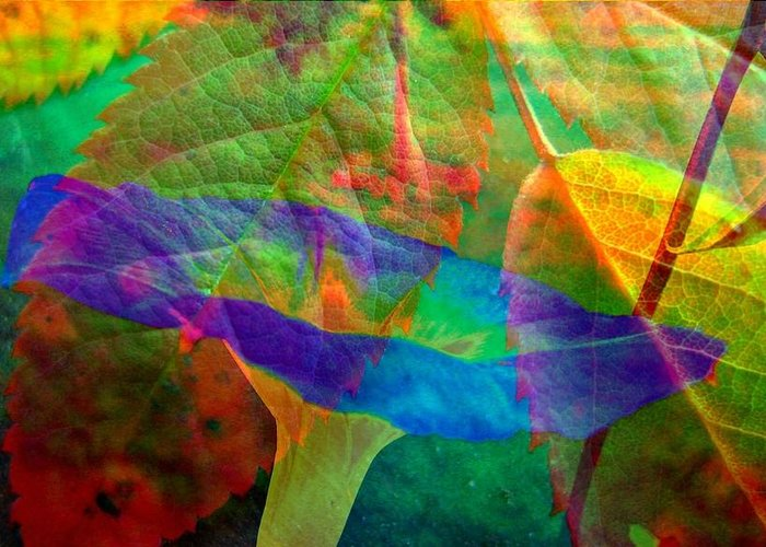 Abstract Greeting Card featuring the photograph Colors Of Autumn by Shirley Sirois