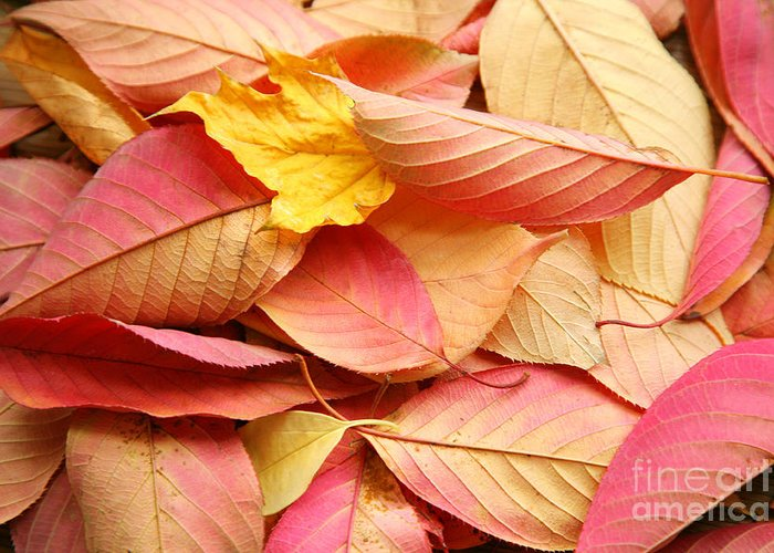 Autumn Greeting Card featuring the photograph Colors Of Autumn by Susan Wall