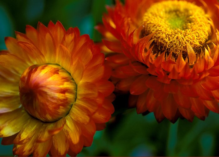 Floral Greeting Card featuring the photograph Colors Of Fall by Kathy Yates