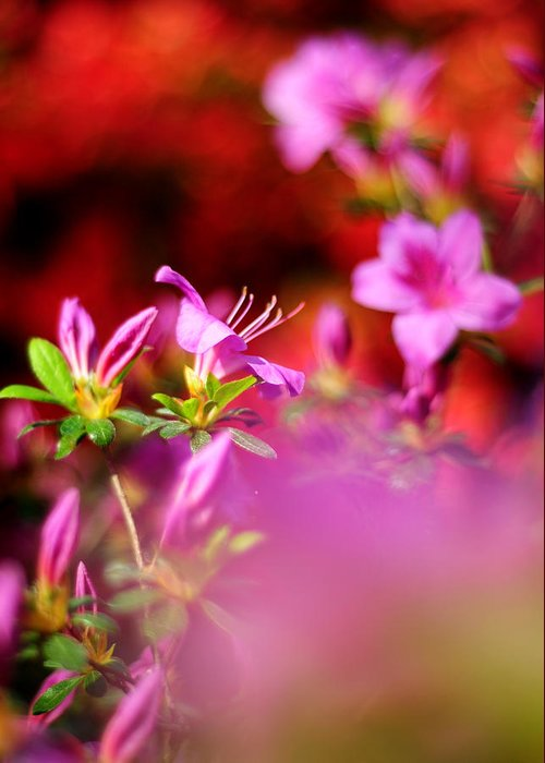 Spring Greeting Card featuring the photograph Colors by Rebecca Sherman