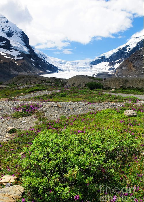 Greeting Card featuring the photograph Columbia Icefield by Ginevre Smith