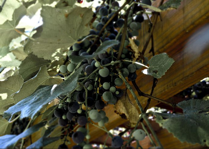 Concord Greeting Card featuring the photograph Concord Grapes by Heather Grow