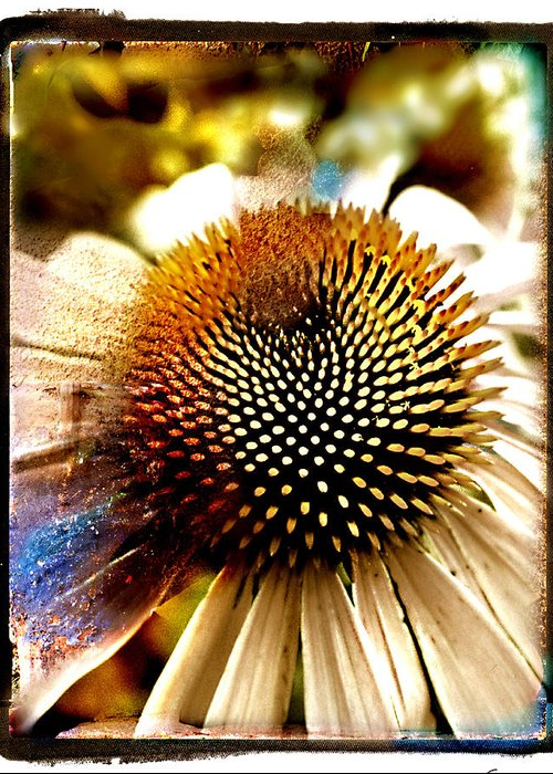 Floral Greeting Card featuring the photograph Cone Flower by Linda Olsen