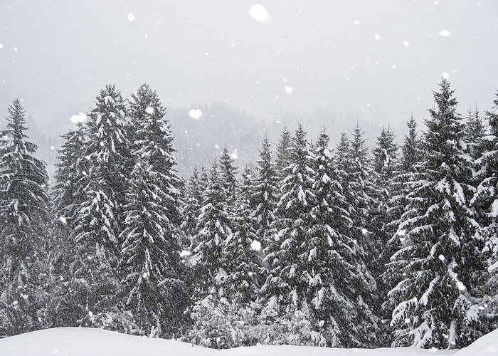 Mp Greeting Card featuring the photograph Coniferous Forest In Winter, Alps by Konrad Wothe