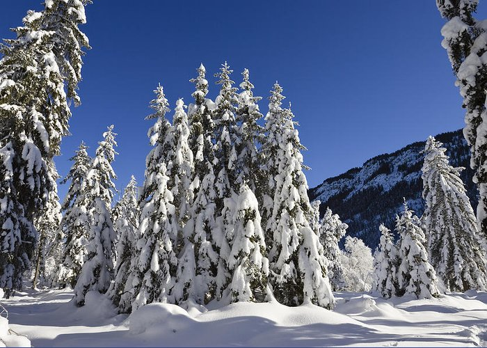 Mp Greeting Card featuring the photograph Coniferous Forest In Winter by Konrad Wothe