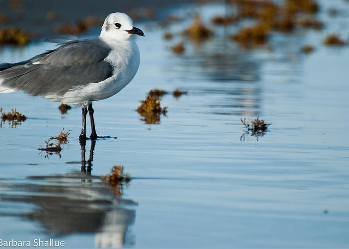 Seagull Greeting Card featuring the photograph Contemplative by Barbara Shallue