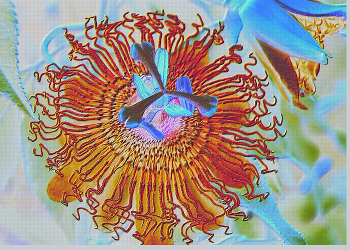 Flower Greeting Card featuring the photograph Copper Passionflower by Rosalie Scanlon