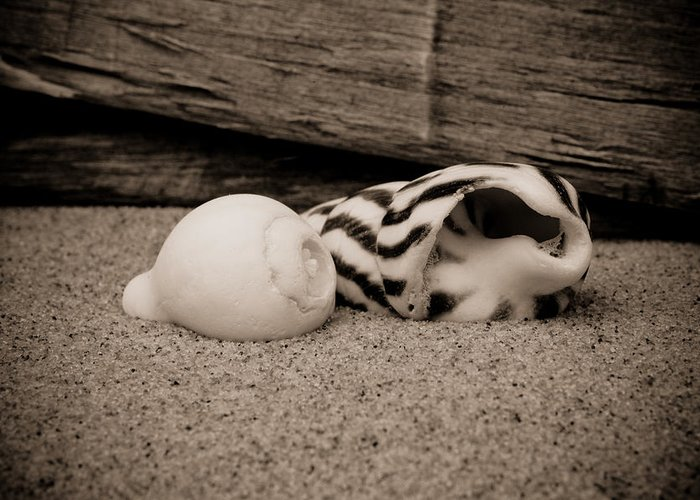America Greeting Card featuring the photograph Coquina Shell - 3 by David Hahn