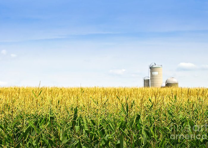 Agriculture Greeting Card featuring the photograph Corn Field With Silos by Elena Elisseeva