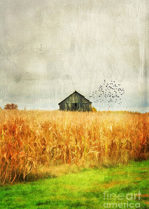 Aged Greeting Card featuring the photograph Corn Fields Of Kentucky by Darren Fisher
