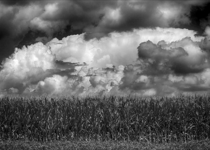 Cornfield And Clouds Greeting Card featuring the photograph Cornfield And Clouds by Robert Ullmann