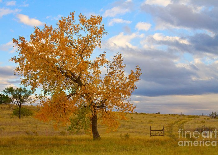Country Greeting Card featuring the photograph Country Autumn Landscape by James BO Insogna