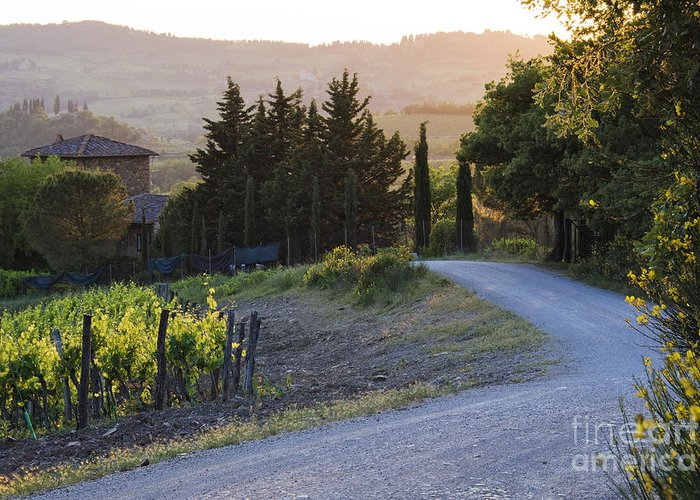 Agriculture Greeting Card featuring the photograph Country Road At Sunset by Jeremy Woodhouse