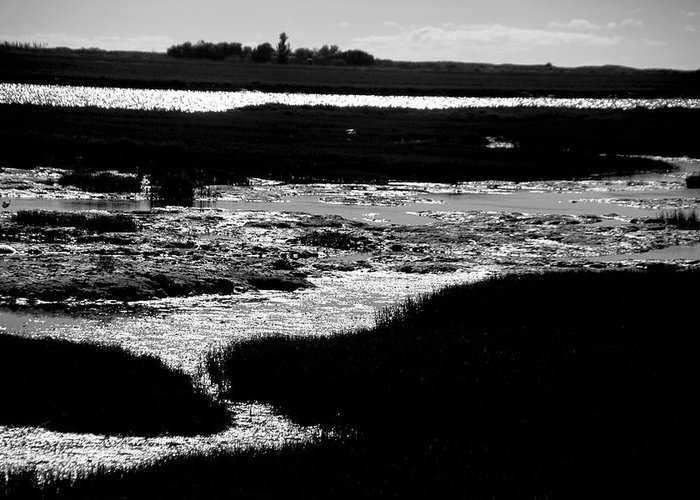 Jezcself Greeting Card featuring the photograph Covering The Marshes by Jez C Self