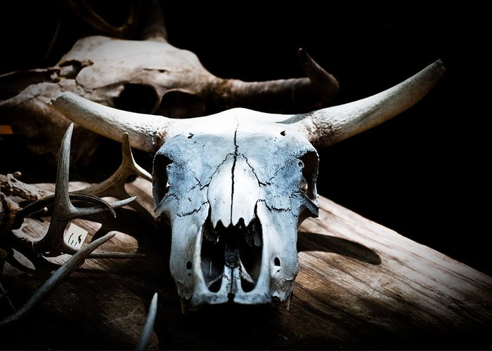 Cow Skull Greeting Card featuring the photograph Cow Skull In Shade by Sonja Quintero