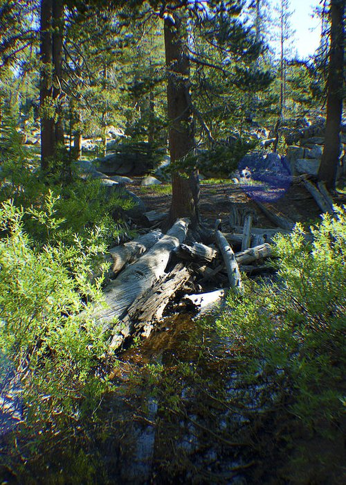 Creek Greeting Card featuring the photograph Creek In White Wolf by M Valeriano