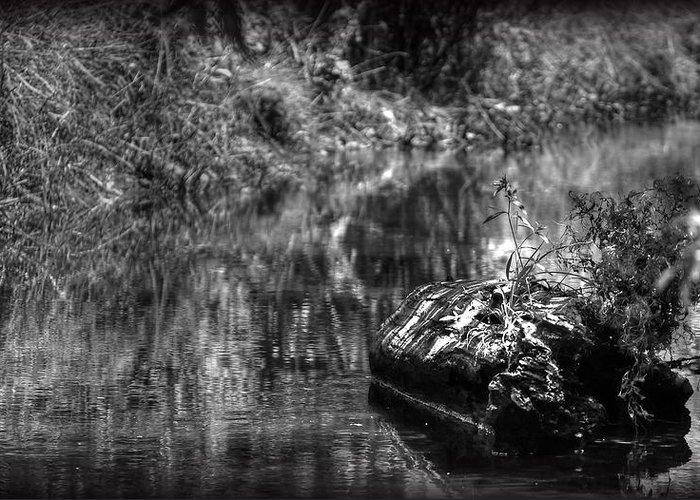 Drift Wood Greeting Card featuring the photograph Creek by Ryan Incardone