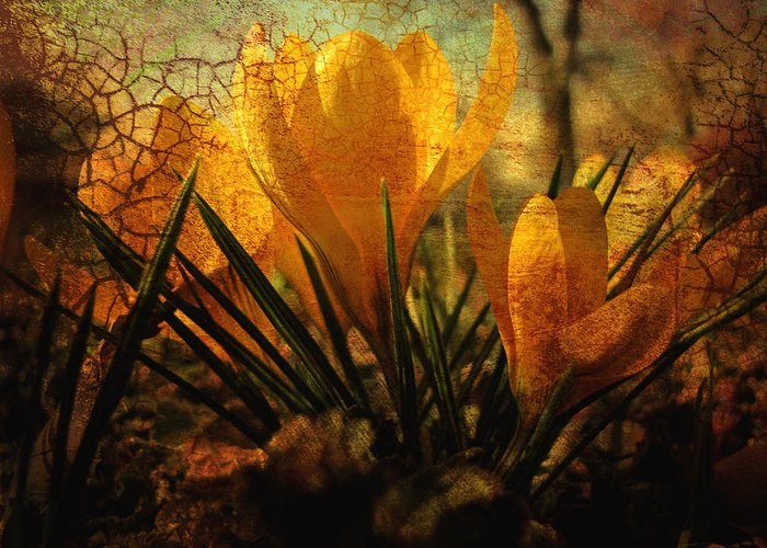 Flower Greeting Card featuring the photograph Crocus In Spring Bloom by Ann Powell