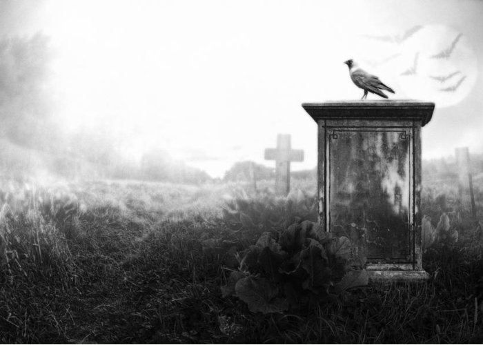 Ancient Greeting Card featuring the photograph Crow On A Gravestone by Jaroslaw Grudzinski