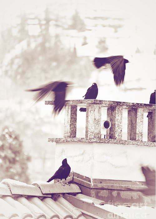 Crows Greeting Card featuring the photograph Crows On A Roof by Silvia Ganora