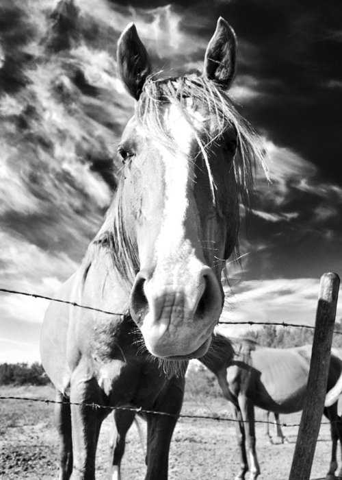 Horse Greeting Card featuring the photograph Curiosity by Alisa Andersen