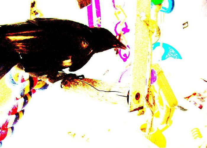 Crow Greeting Card featuring the mixed media Curious Crow by YoMamaBird Rhonda