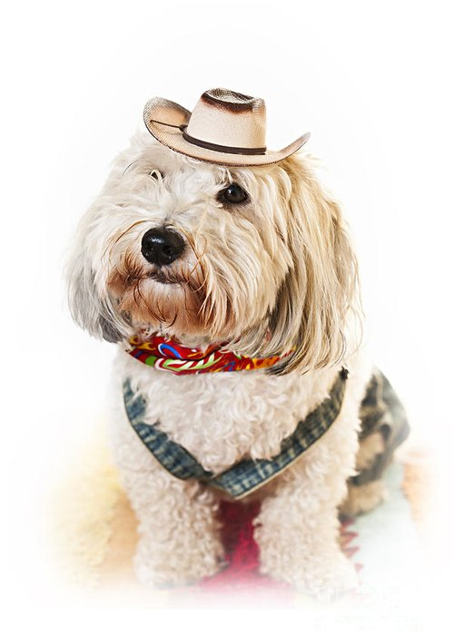 Dog Greeting Card featuring the photograph Cute Dog In Halloween Cowboy Costume by Elena Elisseeva