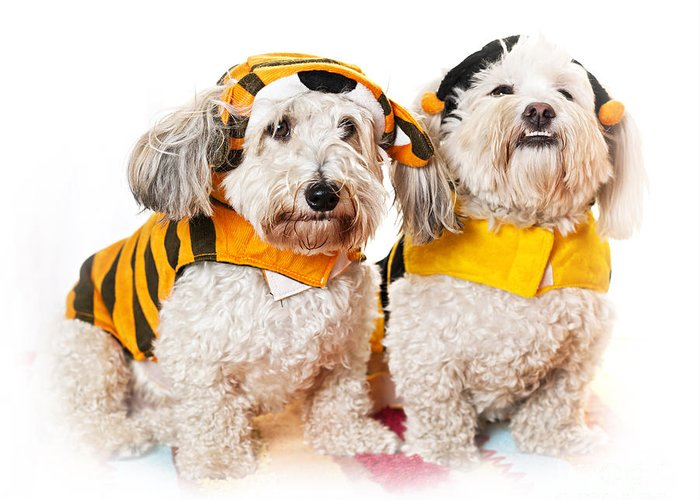 Dogs Greeting Card featuring the photograph Cute Dogs In Halloween Costumes by Elena Elisseeva