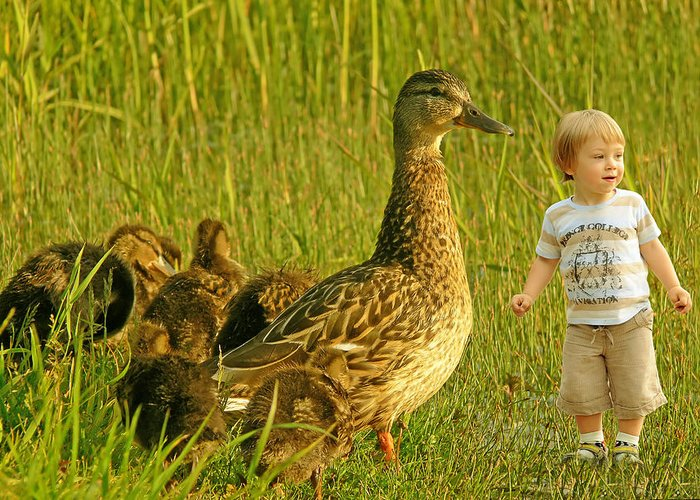 Beautiful Greeting Card featuring the photograph Cute Tiny Boy Playing With Ducks by Jaroslaw Grudzinski