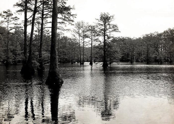 Cypress Greeting Card featuring the photograph Cypress Trees In Louisiana by Ester Rogers