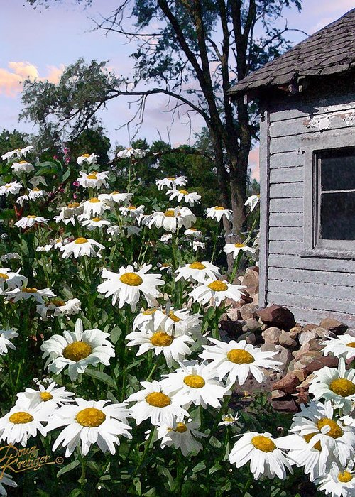 Daisies Greeting Card featuring the painting Daises Delight II by Doug Kreuger