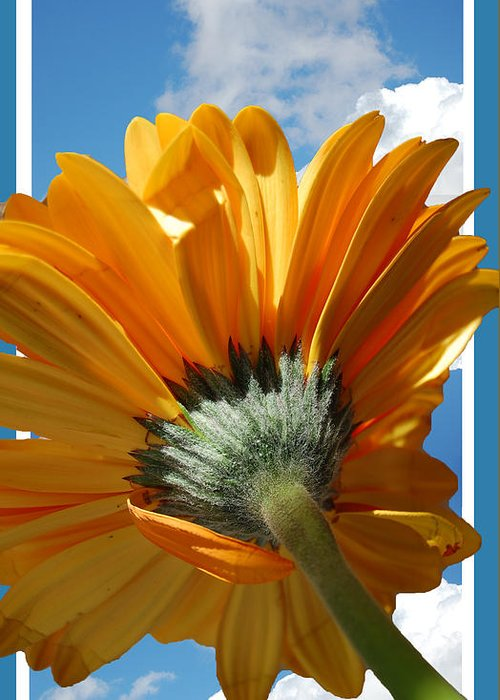 Daisy Greeting Card featuring the photograph Daisy In The Sky by Rozalia Toth