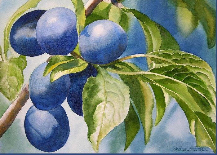 Plums Greeting Card featuring the painting Damson Plums by Sharon Freeman