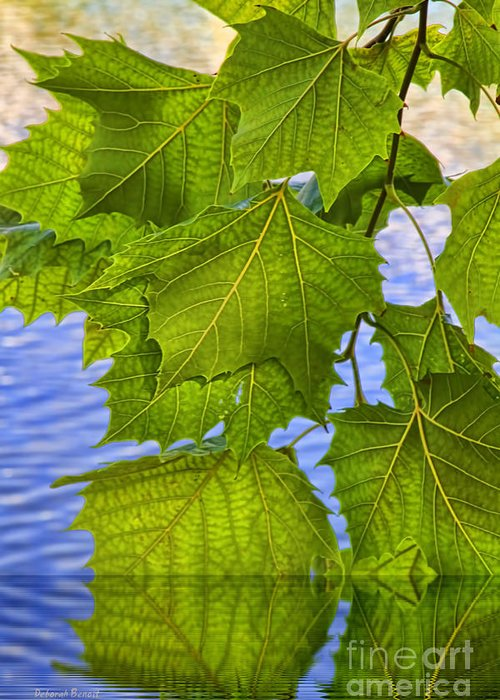 Leaves Greeting Card featuring the photograph Dangling Leaves by Deborah Benoit