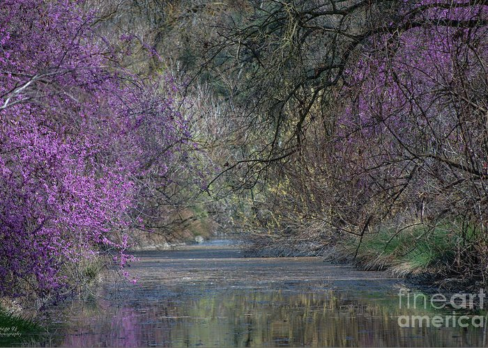 Davis Greeting Card featuring the photograph Davis Arboretum Creek by Diego Re