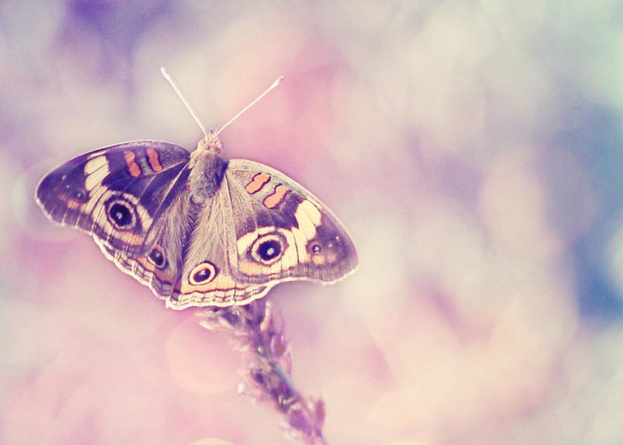Buckeye Butterfly Photography Greeting Card featuring the photograph Day Dream by Amy Tyler